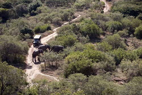 Addo Elephant Park in the Eastern Cape